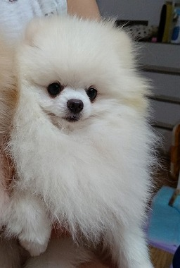 f:id:dog_life_saving:20190717145406j:plain