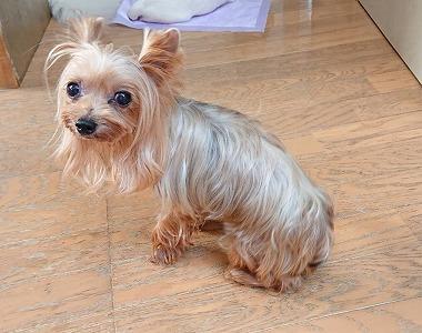 f:id:dog_life_saving:20190912131056j:plain