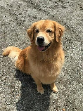 f:id:dog_life_saving:20191030114259j:plain