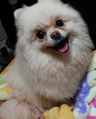 f:id:dog_life_saving:20191030124836j:plain