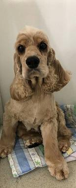 f:id:dog_life_saving:20191126131936j:plain