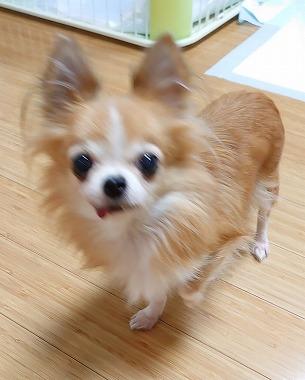 f:id:dog_life_saving:20191126133210j:plain