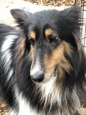 f:id:dog_life_saving:20191126134758j:plain