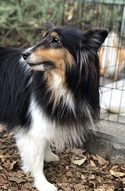 f:id:dog_life_saving:20191126134812j:plain