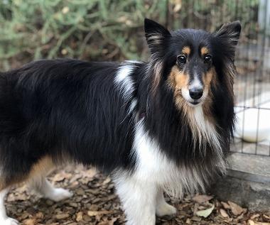 f:id:dog_life_saving:20191126134819j:plain