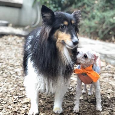 f:id:dog_life_saving:20191126135706j:plain