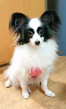 f:id:dog_life_saving:20191126140655j:plain