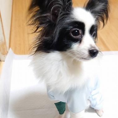 f:id:dog_life_saving:20191126140702j:plain