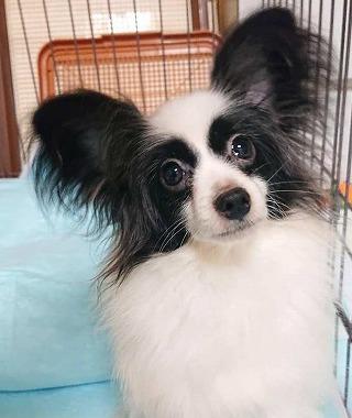 f:id:dog_life_saving:20191126140711j:plain