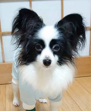 f:id:dog_life_saving:20191126140720j:plain
