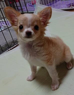 f:id:dog_life_saving:20191126142551j:plain
