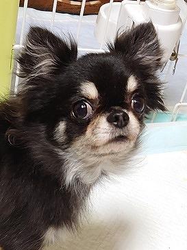 f:id:dog_life_saving:20191126143415j:plain