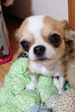 f:id:dog_life_saving:20191126143637j:plain