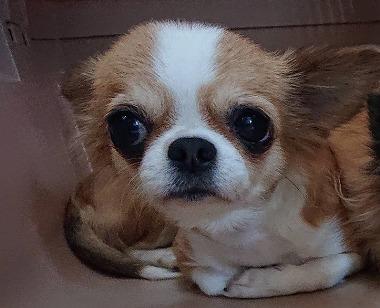 f:id:dog_life_saving:20191126143644j:plain
