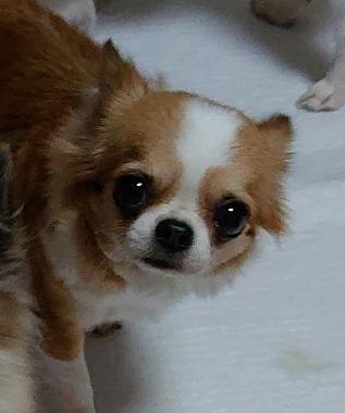 f:id:dog_life_saving:20191126143650j:plain