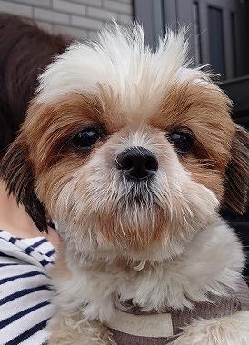 f:id:dog_life_saving:20200114134130j:plain