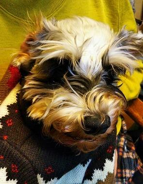 f:id:dog_life_saving:20200114134147j:plain