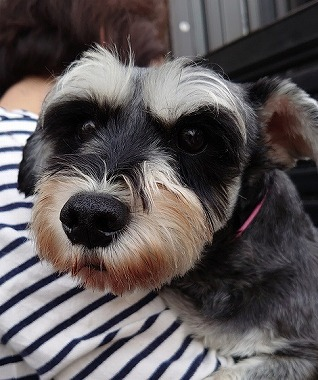 f:id:dog_life_saving:20200114134201j:plain