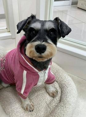 f:id:dog_life_saving:20200114134208j:plain