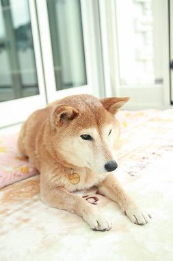 f:id:dog_life_saving:20200114134333j:plain