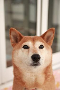 f:id:dog_life_saving:20200114134340j:plain