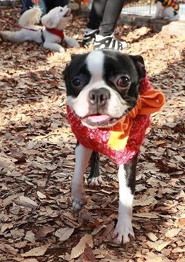 f:id:dog_life_saving:20200302135120j:plain