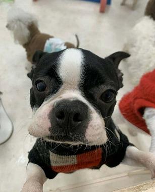 f:id:dog_life_saving:20200302140742j:plain