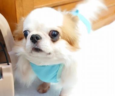 f:id:dog_life_saving:20200303142754j:plain