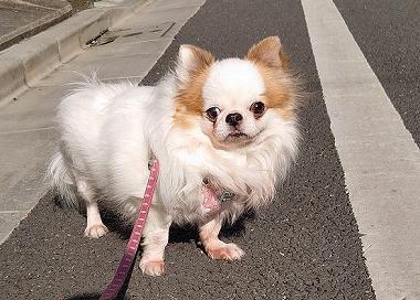 f:id:dog_life_saving:20200303142802j:plain