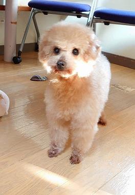 f:id:dog_life_saving:20200303143543j:plain