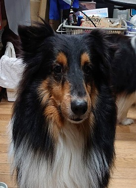 f:id:dog_life_saving:20200401131518j:plain