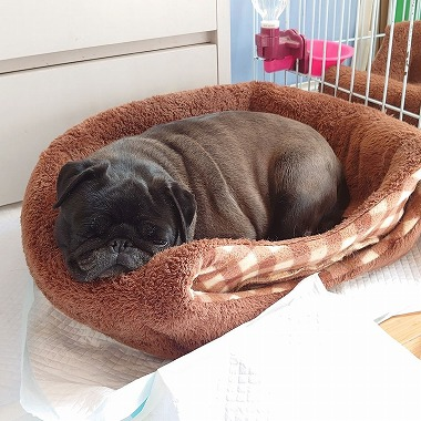 f:id:dog_life_saving:20200401133122j:plain