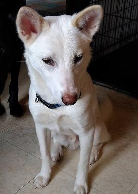 f:id:dog_life_saving:20200525133525j:plain