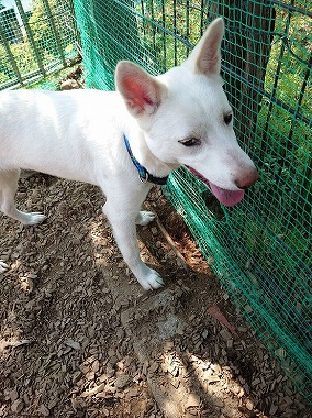 f:id:dog_life_saving:20200525133531j:plain