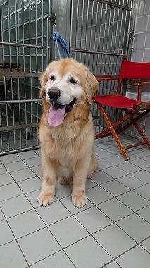 f:id:dog_life_saving:20200805130319j:plain