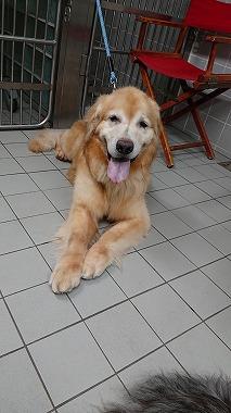 f:id:dog_life_saving:20200805130334j:plain