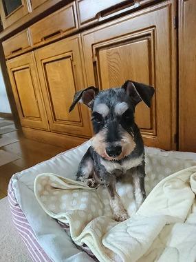 f:id:dog_life_saving:20200805130409j:plain