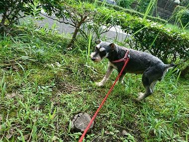 f:id:dog_life_saving:20200805130424j:plain