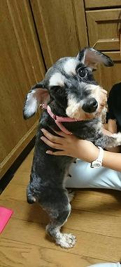 f:id:dog_life_saving:20200805130434j:plain