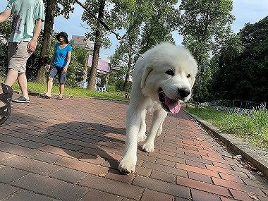 f:id:dog_life_saving:20200814101641j:plain