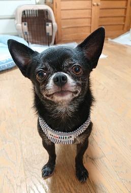 f:id:dog_life_saving:20200923130532j:plain