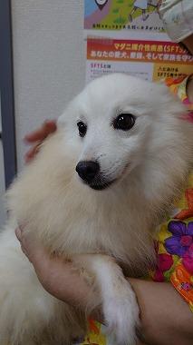 f:id:dog_life_saving:20200923130746j:plain