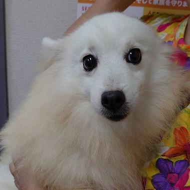 f:id:dog_life_saving:20200923130804j:plain
