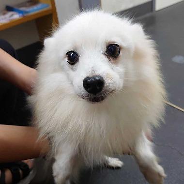 f:id:dog_life_saving:20200923130827j:plain