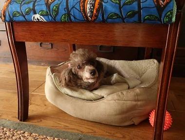 f:id:dog_life_saving:20200923130931j:plain