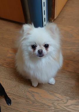 f:id:dog_life_saving:20200923130954j:plain