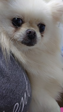 f:id:dog_life_saving:20200923131001j:plain