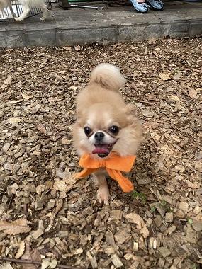 f:id:dog_life_saving:20201007102634j:plain