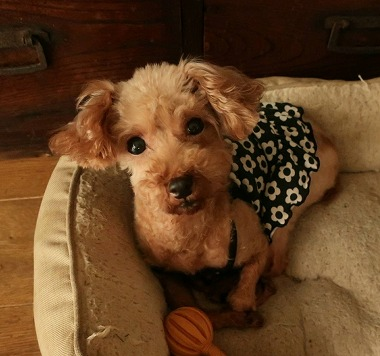 f:id:dog_life_saving:20201007102719j:plain