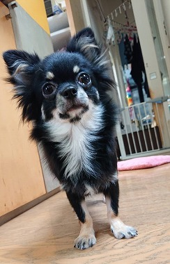 f:id:dog_life_saving:20201023114735j:plain
